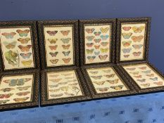 Good set of 8 modern framed and glazed modern prints of butterflies, overall including frame 35 x