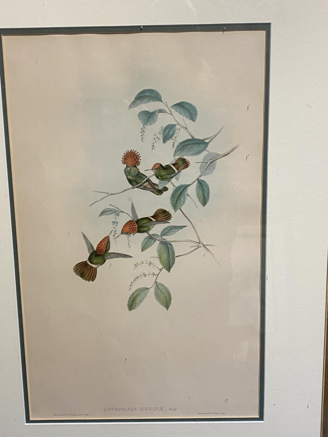 Set of 5 framed and glazed large coloured prints of Humming Birds (condition, some foxing), and - Image 3 of 7