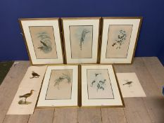 Set of 5 framed and glazed large coloured prints of Humming Birds (condition, some foxing), and