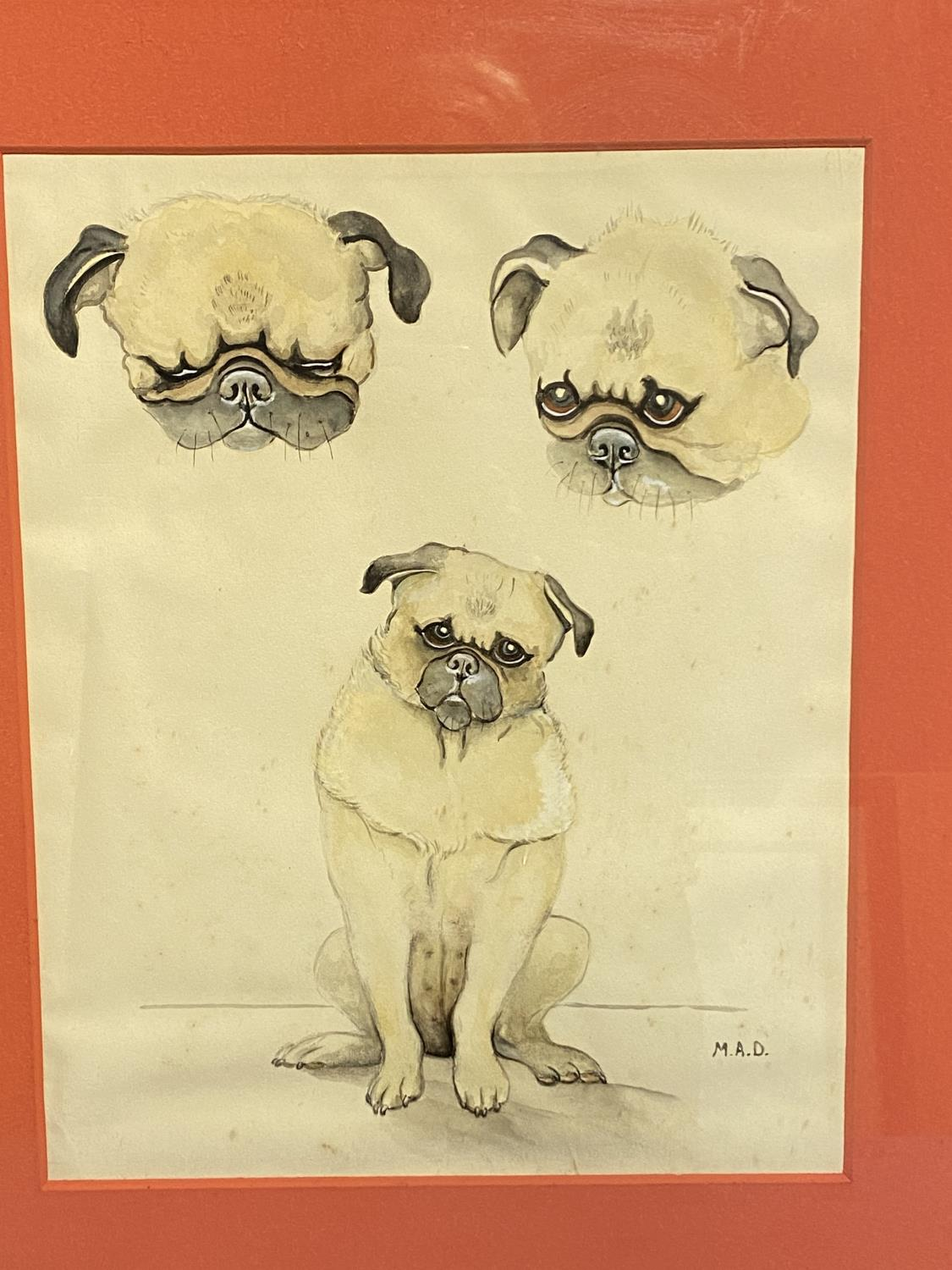 Framed and glazed ink & pencil/mixed media study of Pug dogs, signed lower right MAD, overall size - Image 3 of 4
