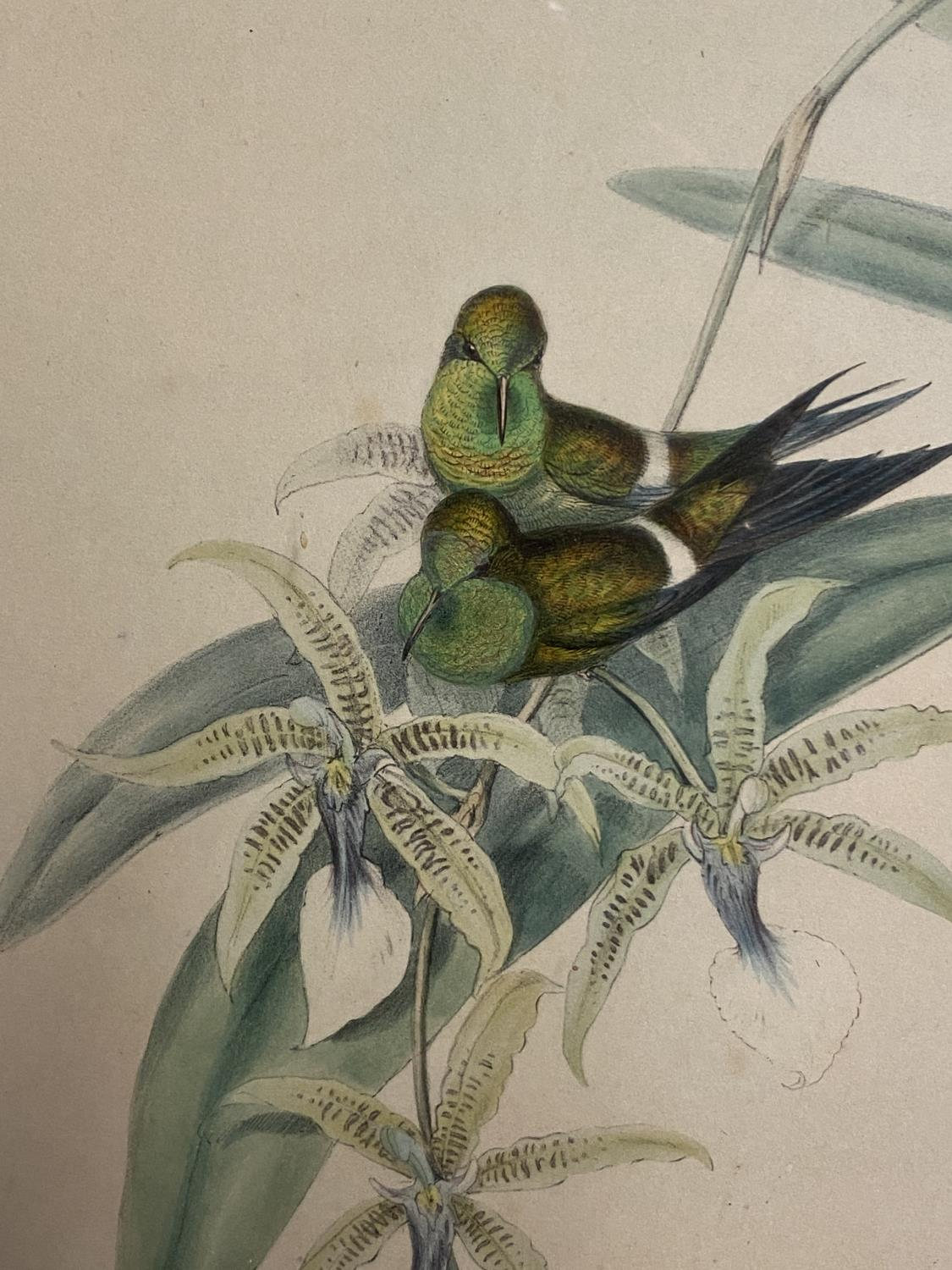 Set of 5 framed and glazed large coloured prints of Humming Birds (condition, some foxing), and - Image 7 of 7