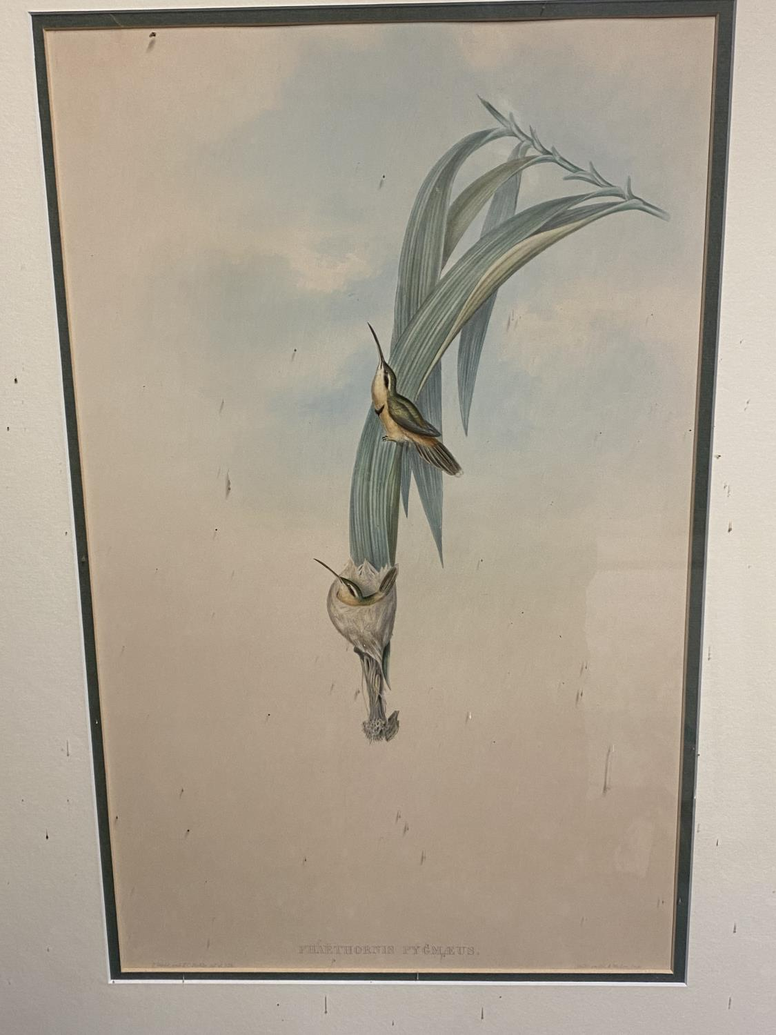 Set of 5 framed and glazed large coloured prints of Humming Birds (condition, some foxing), and - Image 5 of 7