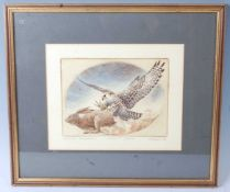 P. Snow, British 20th century, a set of six hand coloured engravings, each depicting a falcon,