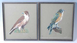 Doreen Lancaster, (British 20th century), study of a Peregrine Falcon (Falco peregrinus) and a Brown