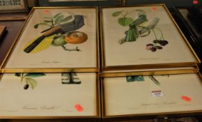 A set of six exotic bird prints, each 42x39cm, together with a watercolour of Polyphemus killing