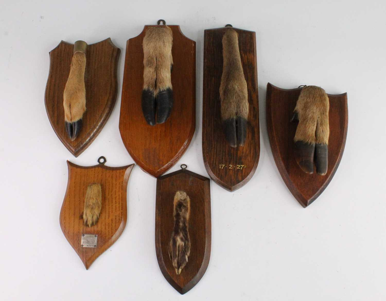 A taxidermy Deer slot, mounted on an oak shield, bearing a label verso 18.10.75. Found Hareknaps