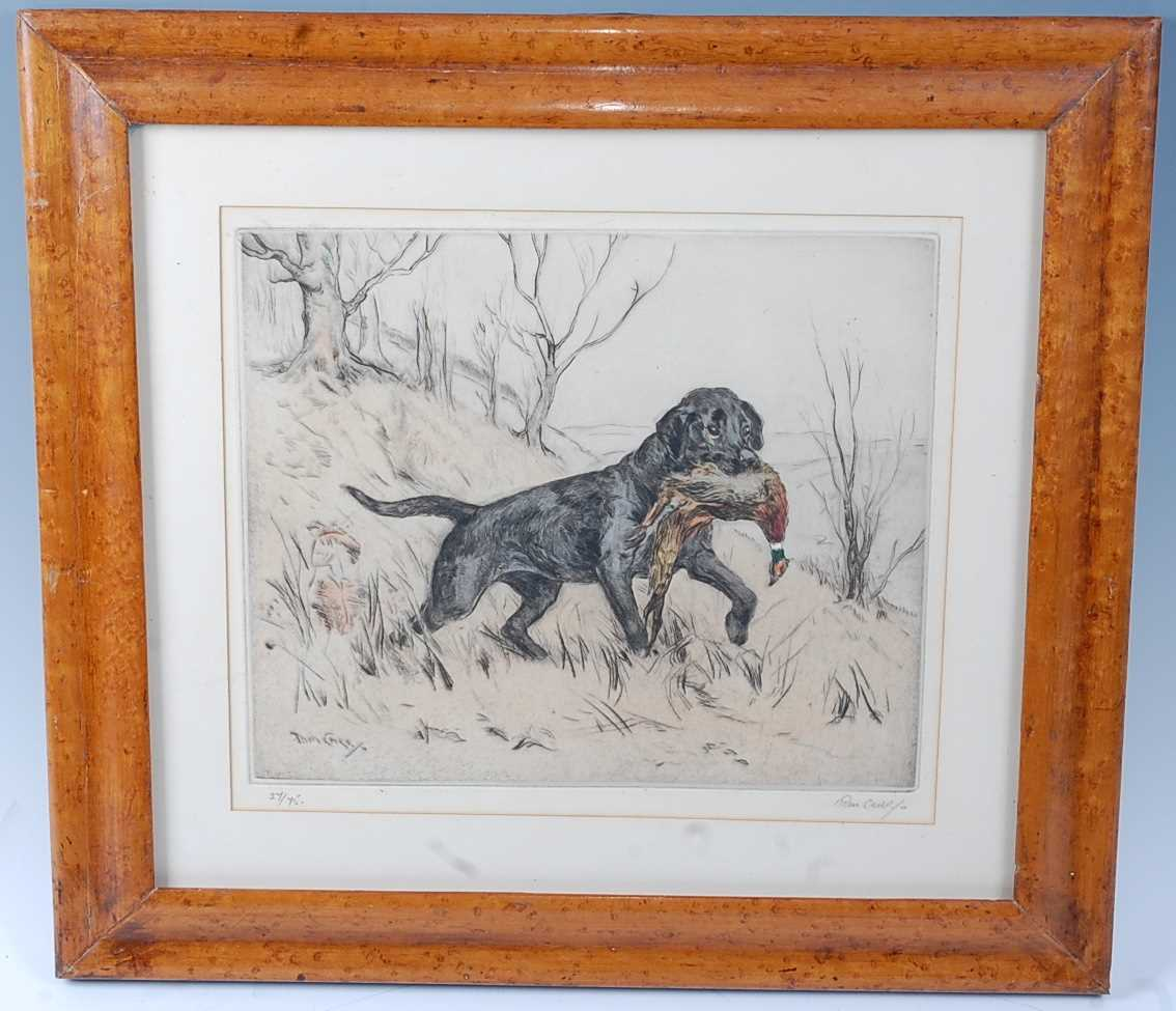 Thomas Carr, (1912-1977), Black Labrador with pheasant, hand coloured etching, signed in pencil to