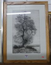 Alfred Blundell - The Black Poplar, etching, signed and titled in pencil to the margin, 48x31cm