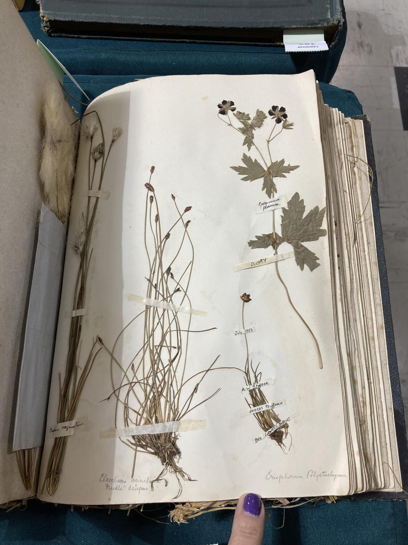 Botanical Specimens. A late nineteenth-century album of pressed specimens on 36 leaves, mounted - Image 9 of 9