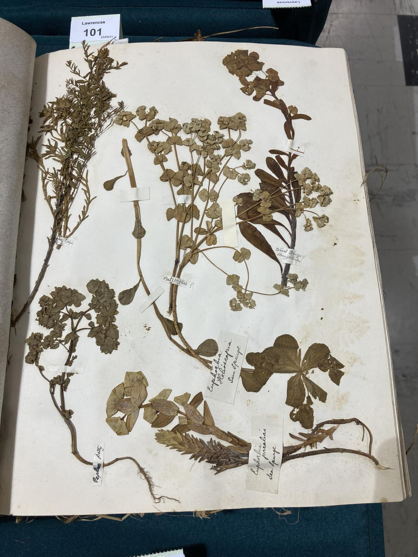 Botanical Specimens. A late nineteenth-century album of pressed specimens on 36 leaves, mounted - Image 4 of 9