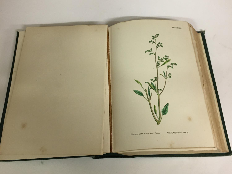 Sowerby, John Edward. English Botany; or, Coloured Figures of British Plants, volumes 1-11, third - Image 7 of 9