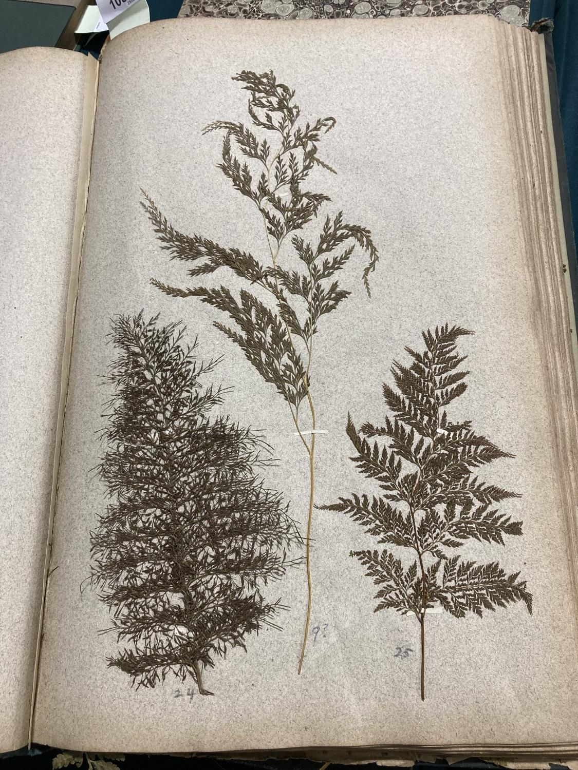 The Botanical Drying Album. A late-nineteenth century album of pressed plants specimens, mostly - Image 7 of 7