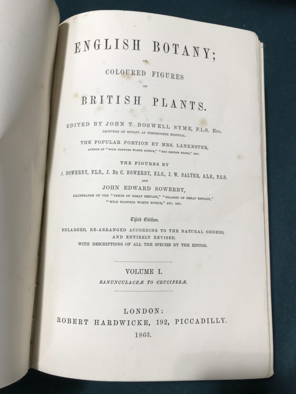 Sowerby, John Edward. English Botany; or, Coloured Figures of British Plants, volumes 1-11, third - Image 3 of 9
