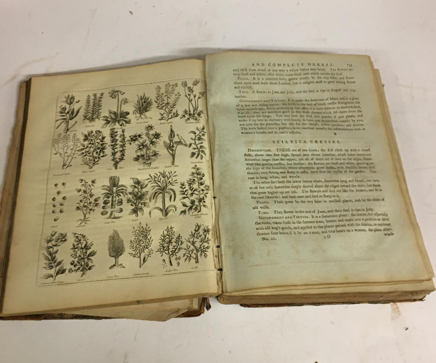 Culpeper, Nicholas. The English Physician; and Complete Herbal... with Notes and Observations, - Image 5 of 7