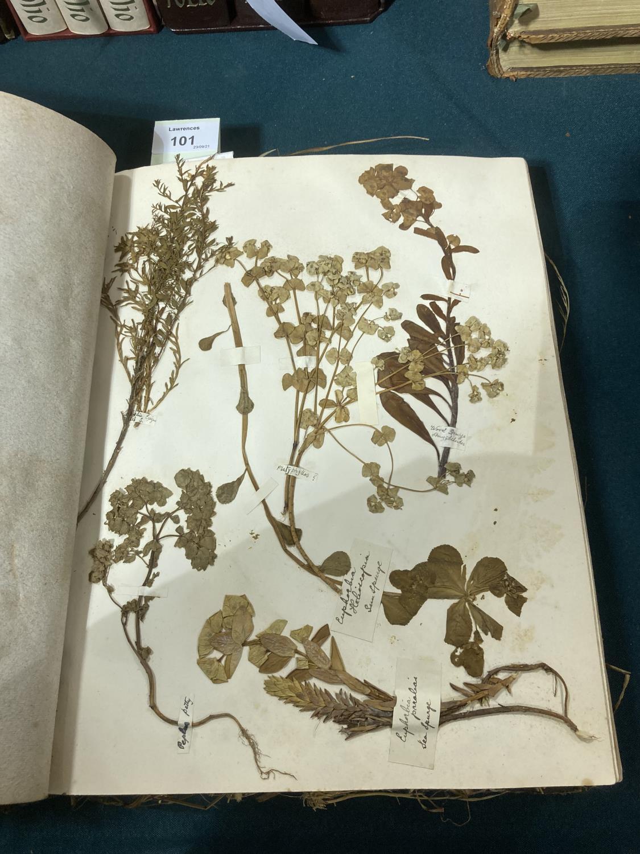 Botanical Specimens. A late nineteenth-century album of pressed specimens on 36 leaves, mounted - Image 3 of 9
