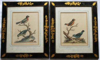 GEORGE EDWARDS (1694-1773) (BIRD SUBJECTS) A pair of coloured etchings from `History of Birds` (