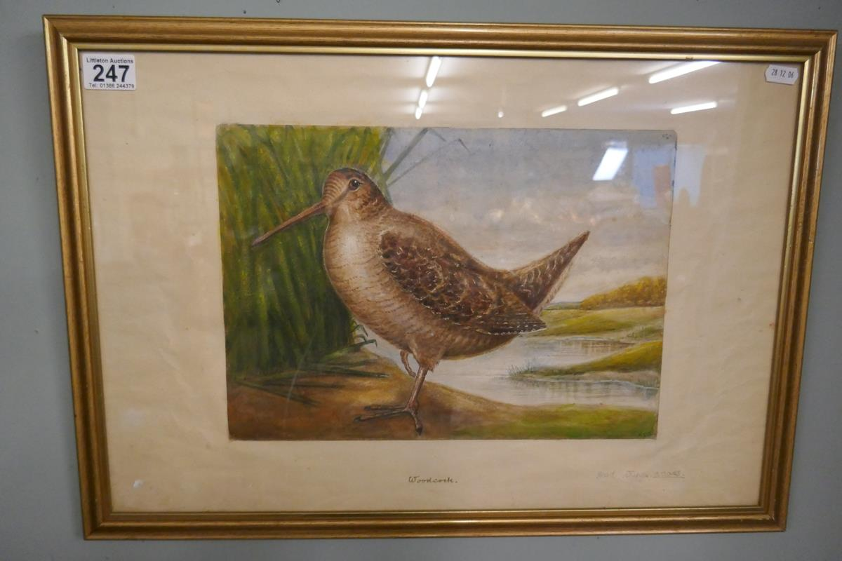 Pair of watercolours signed AVG - Cuckoo & Woodcock - Image 2 of 6