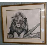 Pen and ink of lion by Sally E Conner
