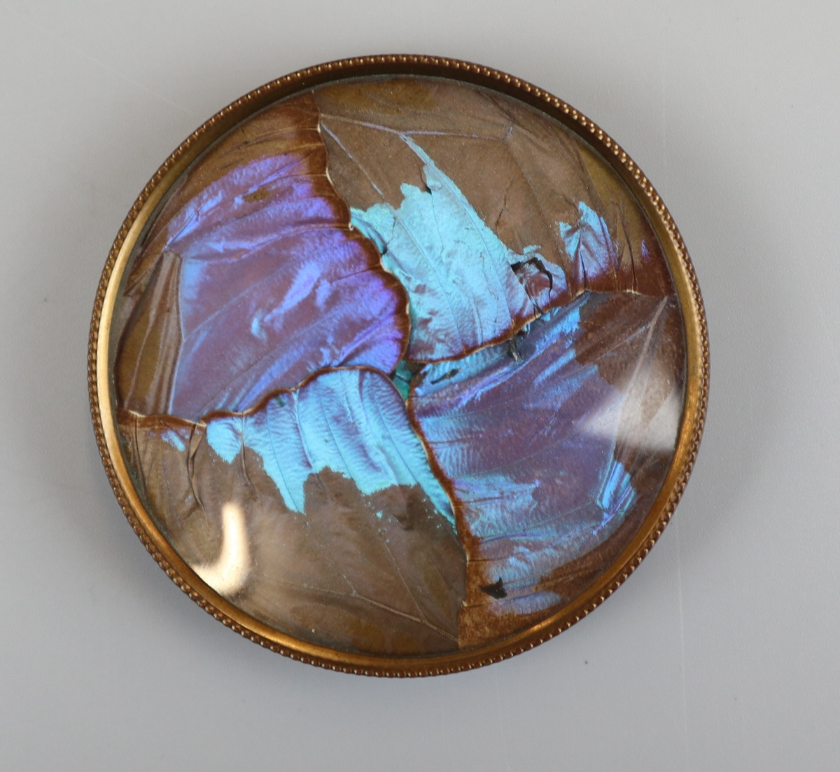 Thomas L Mott - Butterfly wing pin dishes circa 1875 - Image 3 of 5