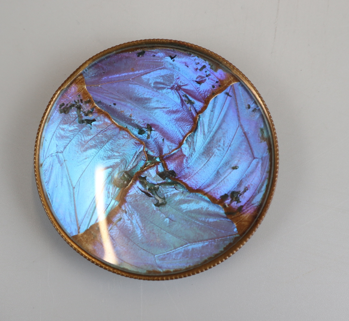 Thomas L Mott - Butterfly wing pin dishes circa 1875 - Image 4 of 5