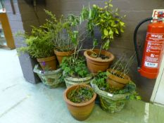 A quantity of terracotta and composite stone garden pots with green plants