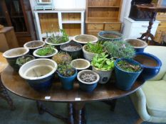 A large selection of glazed plant pots some with green plants