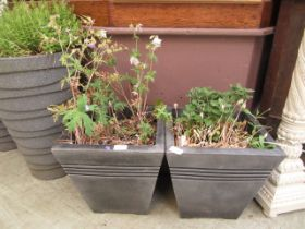 A pair of plastic garden pots containing green and purple plants