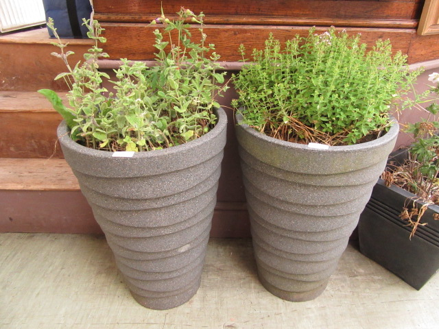 A pair of plastic garden pots containing green plants