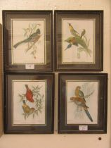 A set of four framed and glazed coloured prints of birds