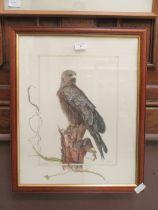 A framed and glazed watercolour of black kite sat on a tree stump signed Glenda Rae