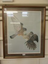 A framed and glazed limited edition print of birds of prey no.