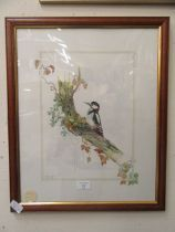 A framed and glazed watercolour of spotted woodpecker signed Glenda Rae