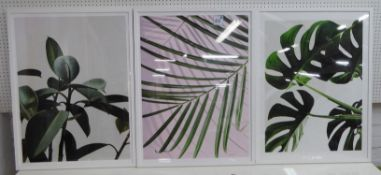 CONTEMPORARY SCHOOL PENTAPTYCH OF BOTANICAL PRINTS, various, framed and glazed, 83cm x 63cm. (5)