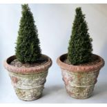 PLANTERS, a pair, weathered terracotta conical with egg and dart rims and classical acanthus