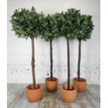 FAUX BAY TREES, a set of four, in terracotta planters, 155cm H. (4)