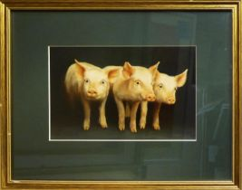 SOPHIA MONTESANTO (Contemporary Italian) 'Piglets', a pair of oil paintings, signed, 22cm x 55cm and