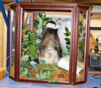 TAXIDERMY INTEREST - A STUFFED BADGER WITH LARGE DISPLAY CASE & TAXIDERMIST CERTIFICATE