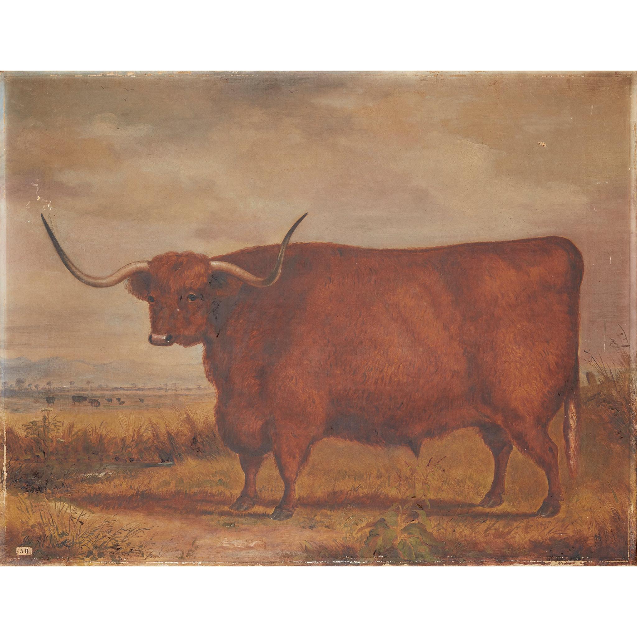 JOHN MCLEOD (SCOTTISH FL.1846-1872) STUDY OF A WEST HIGHLAND OX AGED 5 YEARS