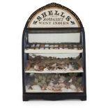 VICTORIAN WEST INDIES SHELL DISPLAY CASE LATE 19TH CENTURY