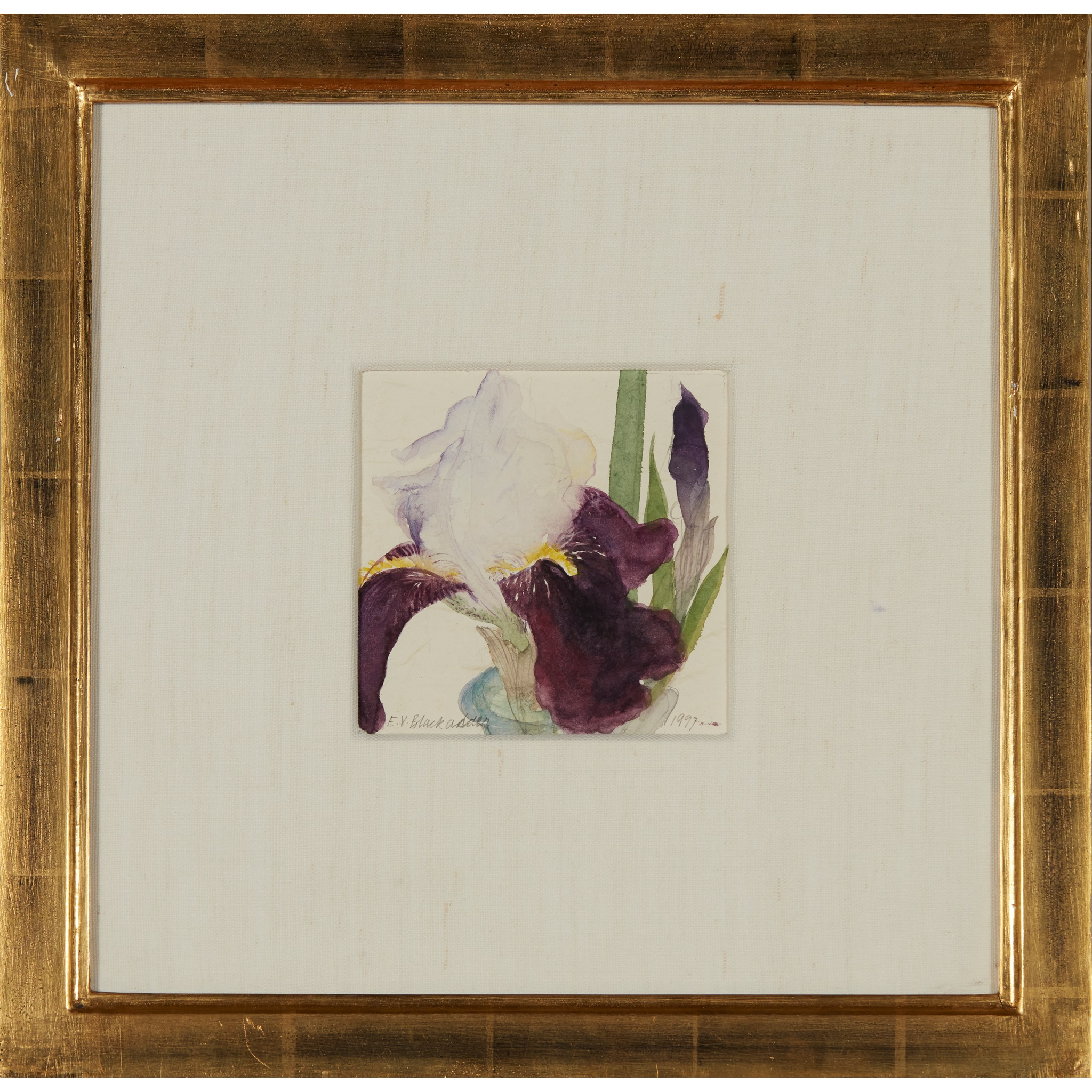 § DAME ELIZABETH BLACKADDER O.B.E., R.A., R.S.A., R.S.W., R.G.I., D.Litt (SCOTTISH 1931-) IRIS, - Image 2 of 3