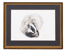 SYLVIA C BALL (20TH CENTURY ENGLISH SCHOOL) A badger eating an apple, pen, ink, watercolour and