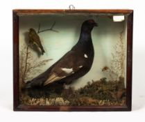 A VICTORIAN TAXIDERMIC GROUSE AND GREENFINCH on a naturalistic base with a glazed case, signed I.