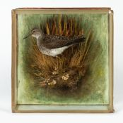 AN ANTIQUE TAXIDERMIC SAND PIPER mounted on a naturalistic base and with a glazed case, overall 27cm