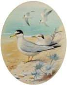 Robin Reckitt (b. 1928) Three ornithological studies of birds 'Ringed Plover' signed and dated