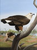 Trevor Boyer (b.1948) 'Pallass's fish eagle' watercolour, signed and dated 1980 lower right, 42 x