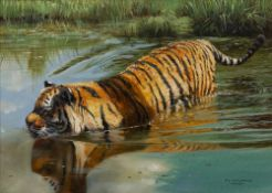 Pip McGarry (b.1955) 'Tiger in water' oil on canvas, signed and dated 2007 lower right, 24.5cm x