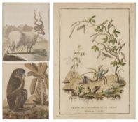 AFTER J CHARTON Plante de Cardamone et le Soldat, engraving, hand-coloured, 38 x 26.5cm; together