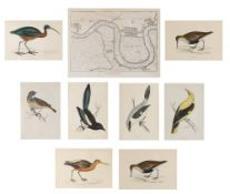 19TH CENTURY ENGLISH SCHOOL: 'Bluebreast', engraving, hand-coloured, 16.5 x 11.5cm; seven further