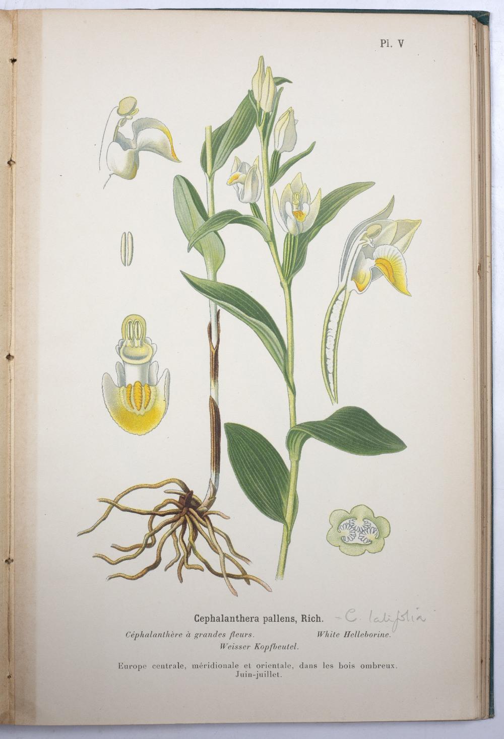 CORREVON, Henry (1854-1939), Swiss Botanist Album des Orchidées de L'Europe centrale et - Image 3 of 3