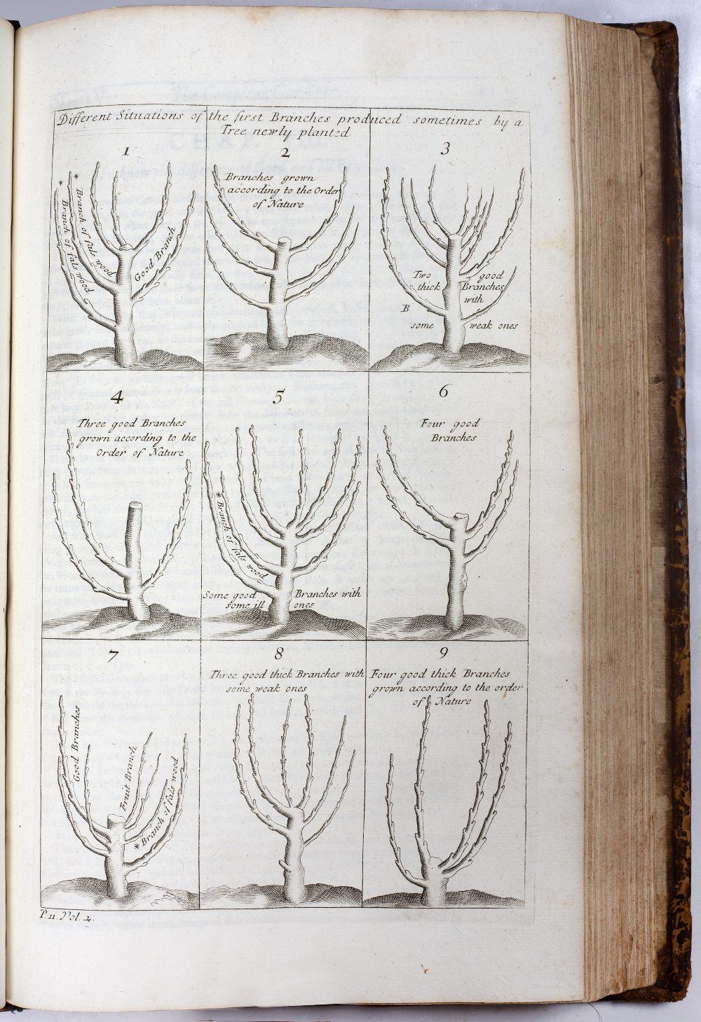 LA QUINTINYE, Jean de, 'The Compleat Gard'ner; or Directions for Cultivating and Right Ordering of - Image 6 of 10